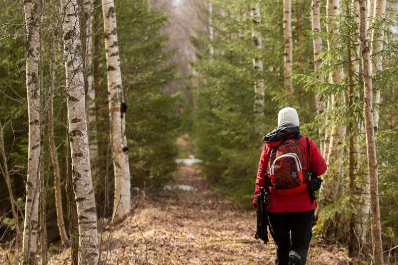 Två människor går på en skogsstig från kameran med stavar. Personen närmast är i fokus och man ser hennes skor och ben.